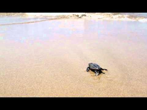 Χελωνάκια στη Λάρα