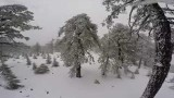 Troodos Mountain Heavy Snow